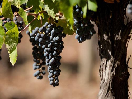 winesofchile_header
